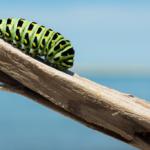 7 estrategias para afrontar el cambio en la vida y en la empresa